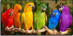Кольоротерапія: колір для здоров'я і настрою