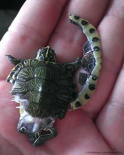 Чим годують черепах