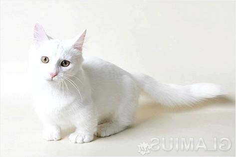Фото - Як позбутися від котячого запаху