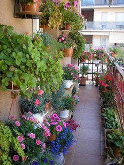 Як оформити балкон квітами