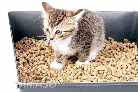 Фото - Як відучити кота мітити в будинку