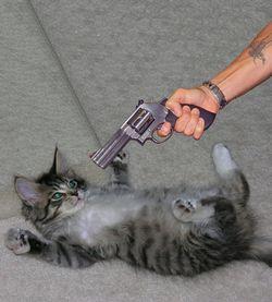 Як відучити кота мітити в будинку
