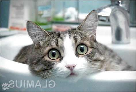 Фото - Загальні рекомендації по купанню кішки