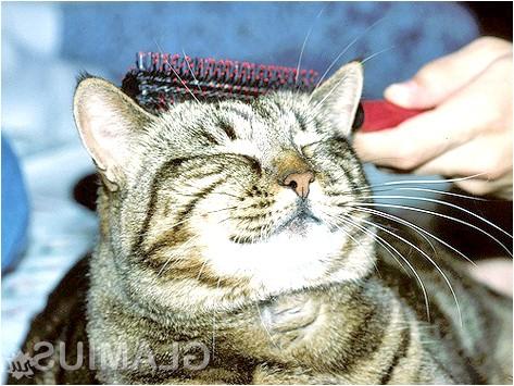 Фото - Як підготувати кішку до купання
