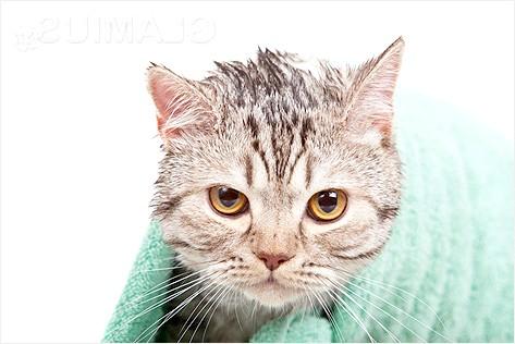 Фото - Як витерти кішку після купання
