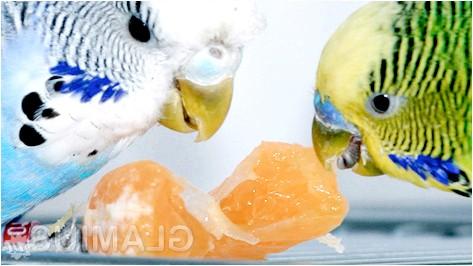 Фото - Як годувати папуг