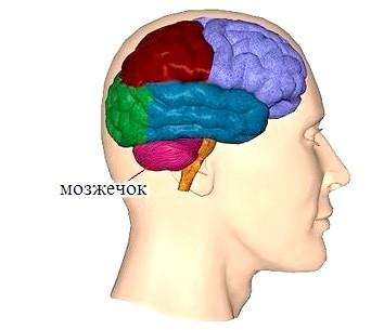 Мозочок