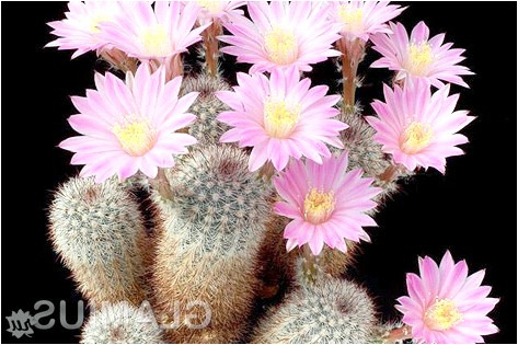 Фото - Як пересадити кактус