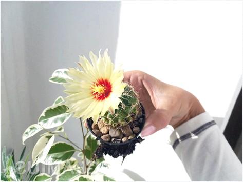 Фото - Вилазила коріння кактуса внизу горщика
