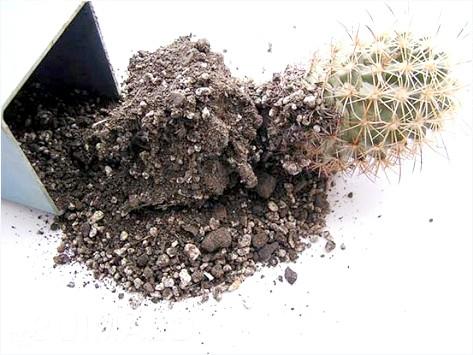 Фото - Перевалка кактуса