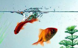 Як доглядати за акваріумними рибками