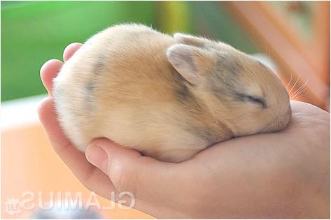 Фото - Як доглядати за декоративними кроликами