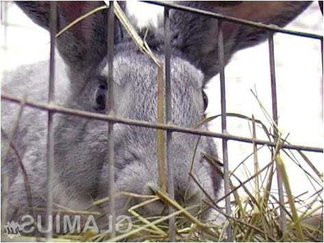 Фото - Де містити кролика