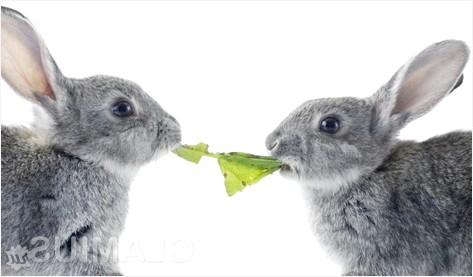 Фото - Харчування кролика