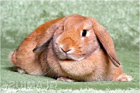 Фото - Як доглядати за кроликом