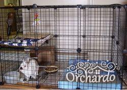 Як доглядати за декоративними кроликами