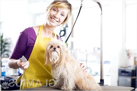 Фото - Як вибрати машинку для стрижки собак