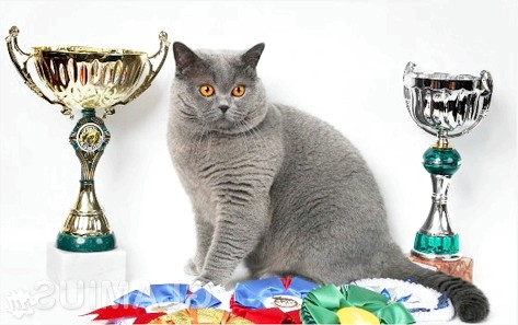 Фото - Для чого кішка