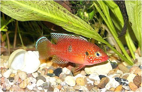 Фото - Догляд за акваріумом