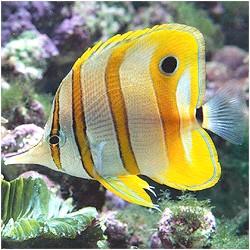 Фото - Гарний акваріум