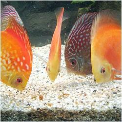 Фото - Риби риють грунт