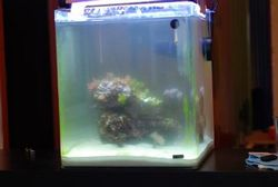 Фото - Чому каламутніє вода в акваріумі