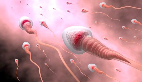 Тренування з обтяженнями впливають на сперму