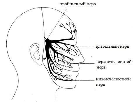 Трійчастий нерв